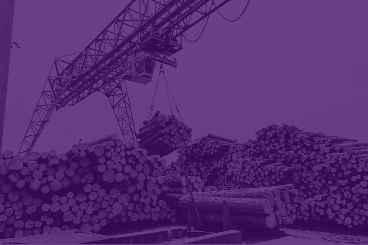 Exportação de madeira: últimos 12 meses